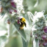 Homemade Bumble Bee Killer | eHow