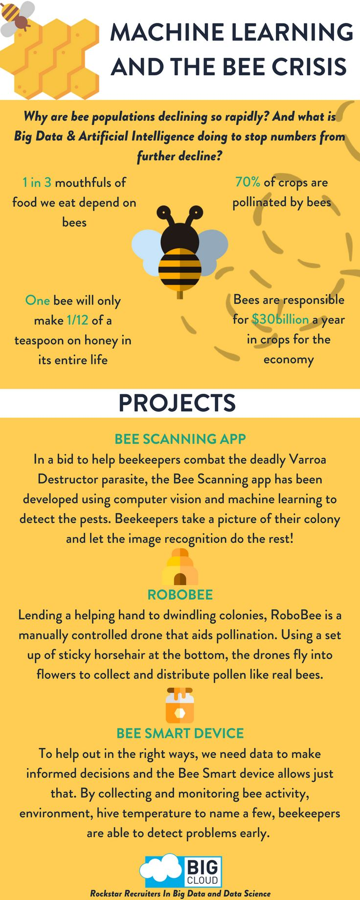 Machine Learning and The Bee Crisis