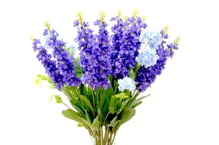 18 DISTINCTIVE BENEFITS OF LAVENDER. Are you conversant with what lavender can o...