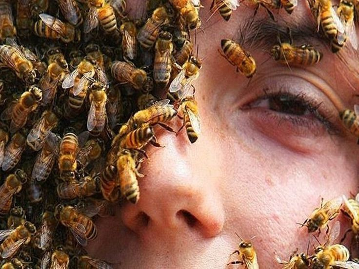 Check out fun bee, bumblebee, honey bee and wasp facts. Learn about different ty...