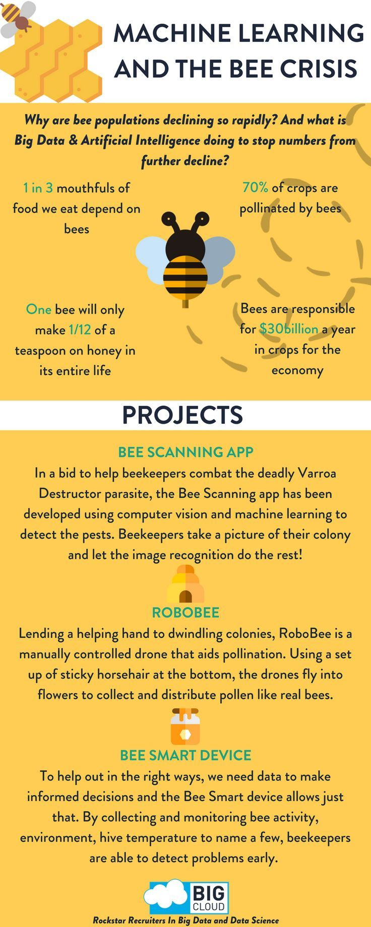 Drone Infographics : Machine Learning and The Bee Crisis