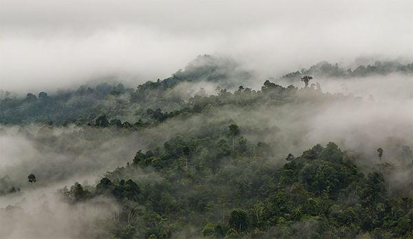 Borneo on Behance