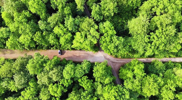 Landscape Drone Photography Green Trees In A Forest And Car Aerial Captured From Above Wi