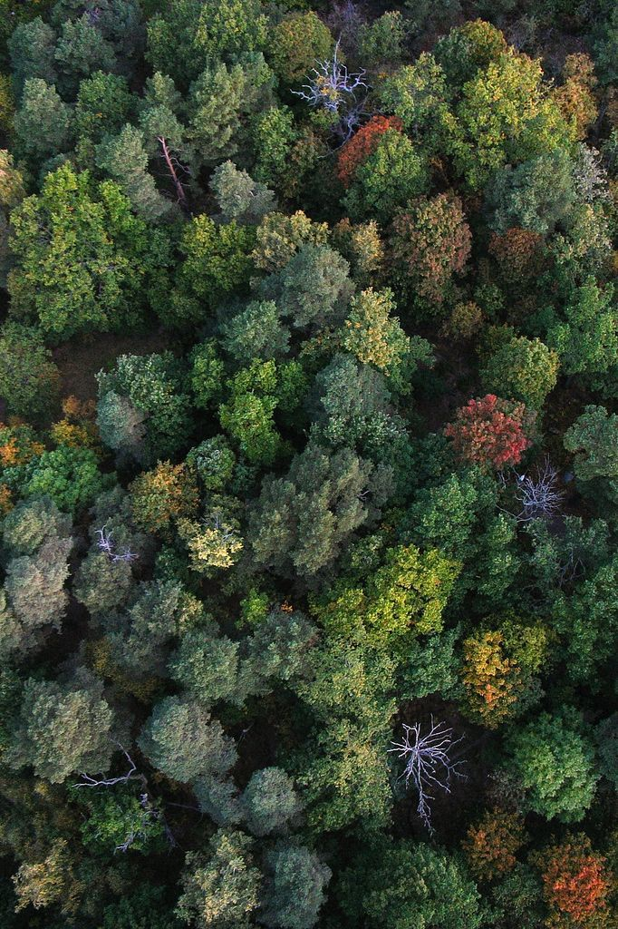aerial view of autumn colored trees, sweden   nature + landscape photography