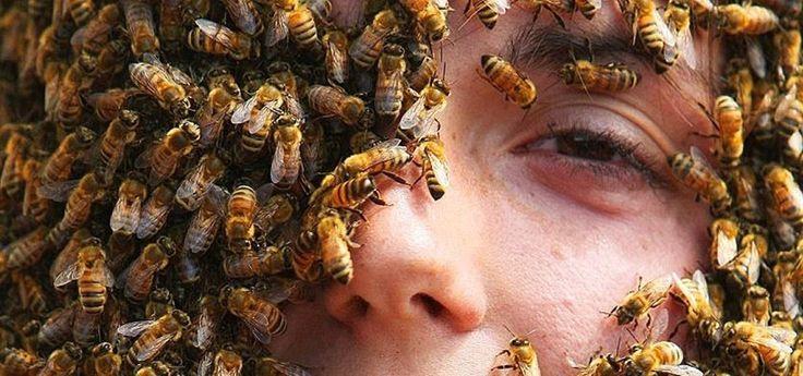 How to Make a Homemade Bee & Wasp Trap (Kill or No-Kill) « MacGyverisms