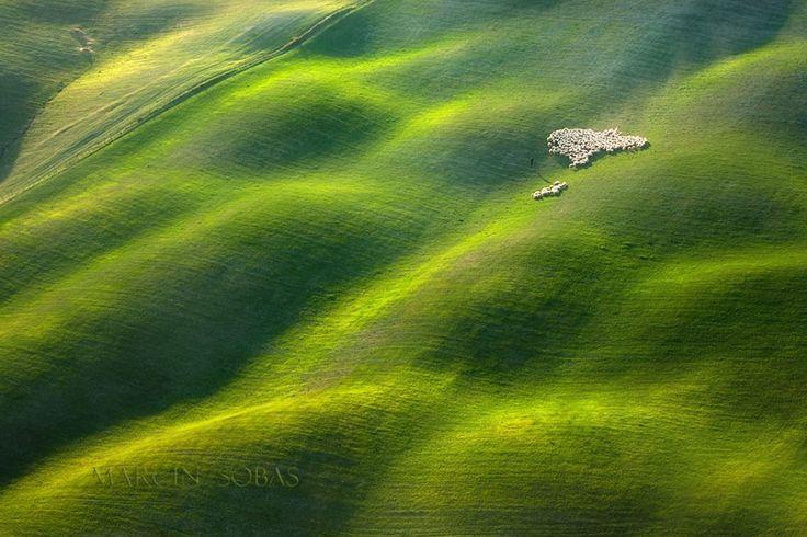 Landscape Drone Photography : Des moutons dans les champs de Toscane par Marcin ...