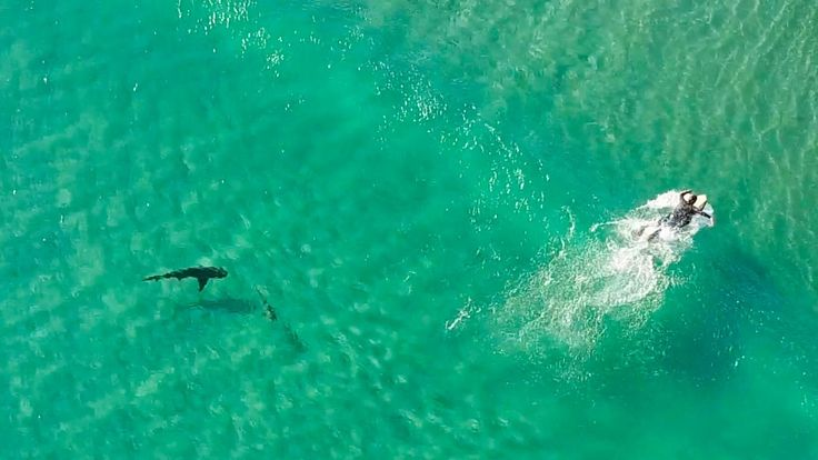 This incredible DJI Mavic Pro drone footage shows sharks approaching surfers and paddle boarders near the Fort Pierce Inlet in Fort Pierce, Florida. At one point a big shark nearly attacks a smaller shark right next to a surfer!!