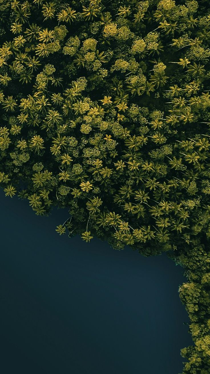Drone photography. Aerial View. Forest from above. Palm trees. Tropical destination