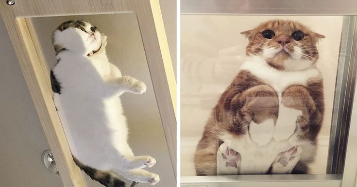 49 Hilarious Reasons Why Every Cat Owner Should Get A Glass Table