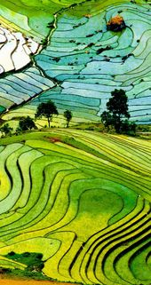 Sapa rice terrace is top 30 of natural beauty in the world #riceterrace #Sapa #S...
