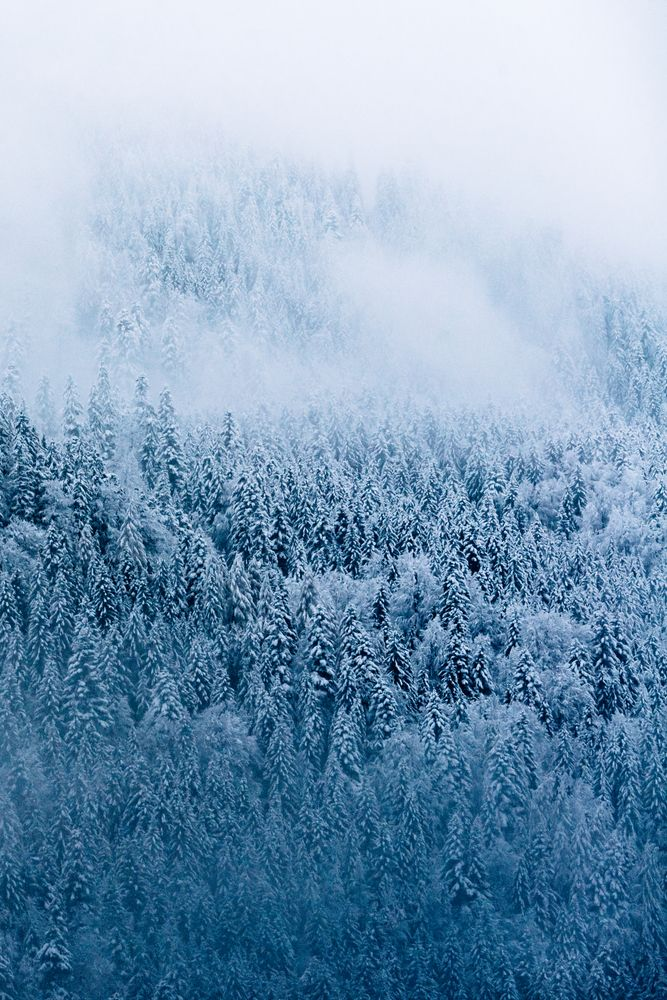 Moody Winter Forest in the German Alps – Landscape Photography Art Print by regnumsaturni