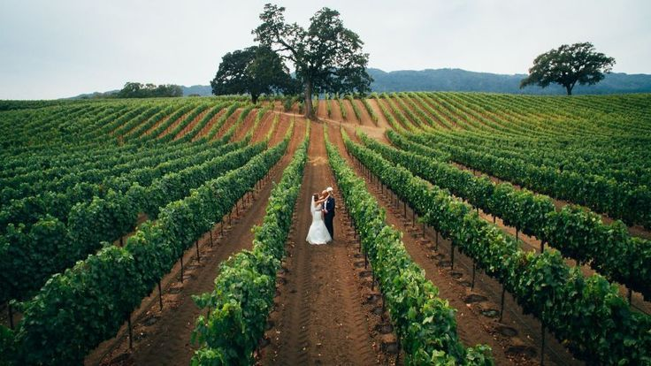 Wedding videos take a leap with drone technology